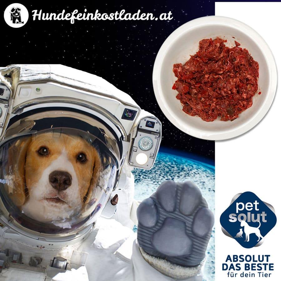 spacedog2